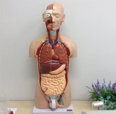 解剖学Ⅱ・Ⅲ 解剖見学実習